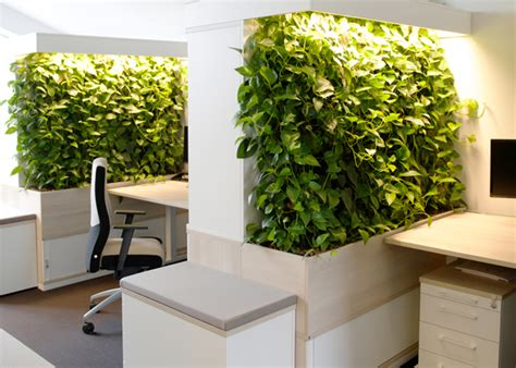 Gruene Wand Raffinierter Blickfang Fuer Die Wohnung raumteiler pflanzen innen