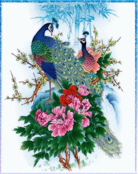 Animated Peacock Wallpapers - 841 best images about animation on and