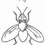 Drawing Outline Fly Coloring Getdrawings sketch template