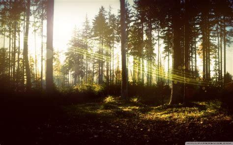 magical forest wallpaper