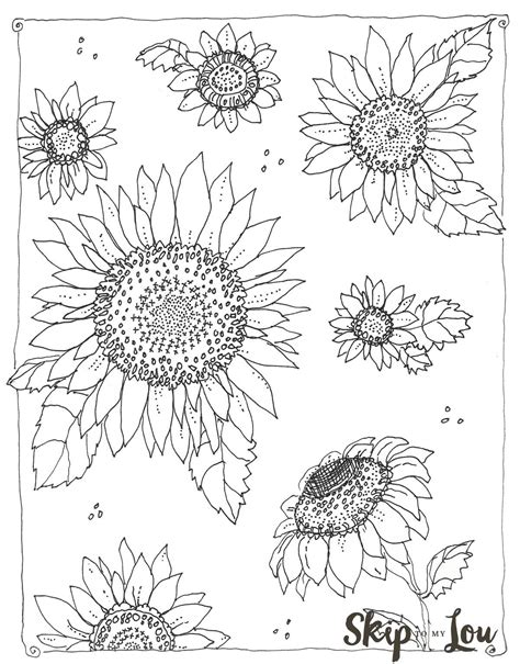 kansas day sunflower coloring page   pinterest