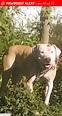Lost Female Dog in Lake Alfred, FL 33850 Named Diamond ...