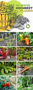 Pflanzen Für Gute Raumluft : die besten hochbeetpflanzen gem se kr uter fr chte f r ~ A.2002-acura-tl-radio.info Haus und Dekorationen