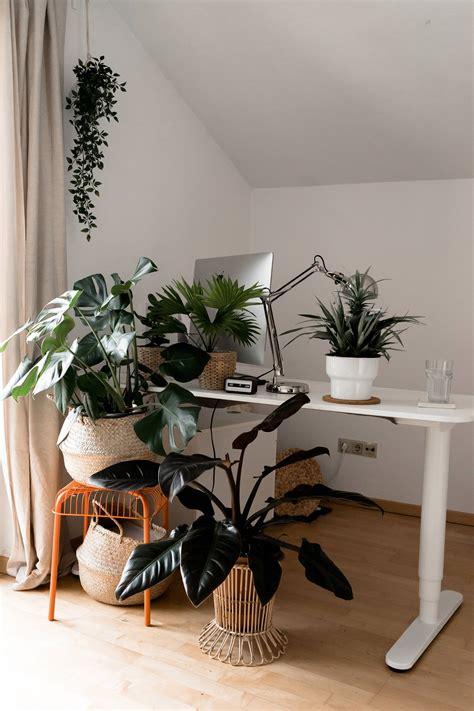 Pflanzen Im Zimmer by Mit Gr 252 Nen Zimmerpflanzen Eine Tolle Oase Schaffen Der