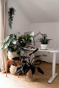 Pflanzen Wenig Licht : mit gr nen zimmerpflanzen eine tolle oase schaffen der gro e gr npflanzen guide ~ Markanthonyermac.com Haus und Dekorationen