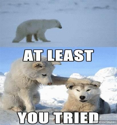 Bear Polar Ruff Mister Amp Meme