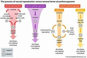 Animal reproductive system - Image and Video | Britannica.com