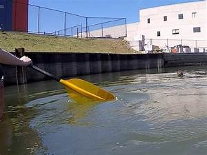 Seal Spotted Swimming In Gowanus Canal | Gowanus, NY Patch