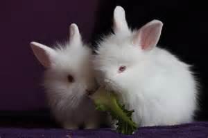 flower companies kostenloses foto kaninchen hasen klein putzig