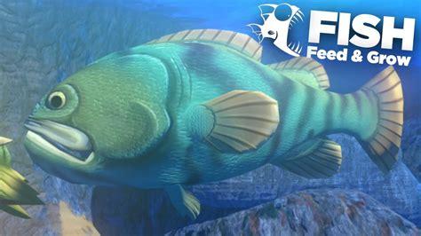 feed grow goliath fish grouper beaver gaming ep ep9 thegamingbeaver