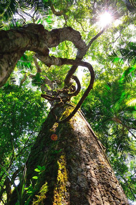 brown tall trees  sunny sky  stock photo