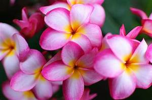 Exotic Flower Wallpapers