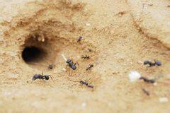 ameisen im beet ameisen an 187 sind sie n 252 tzlich oder sch 228 dlich