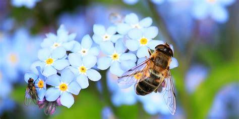 Der Bienenfreundliche Garten by Bienenweide Garten Bienenfreundlich Gestalten Careelite 174