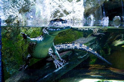 aquarium porte dor 233 e visite des aquariums et expositions temporaires