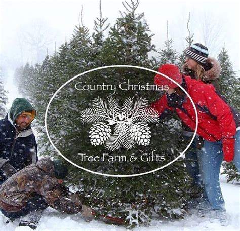 michigan christmas tree association michigan tree association 273 photos organization p o box 252 durand michigan