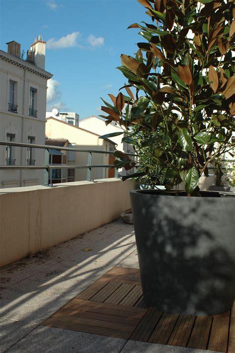 magnolia grandiflora pot en fibre de tapis de