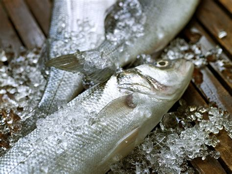 seafood butcher fresh foods fish specialty phoenicia slideshow selection
