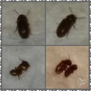 rid  bugs   kitchen thriftyfun