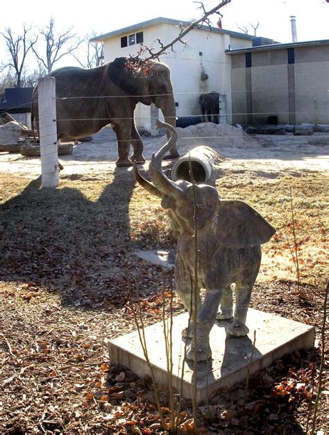 topeka zoo puts elephants top priority sales tax funds news