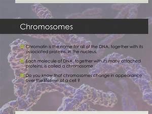 Organelles  U0026 Diseases Related