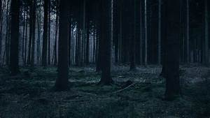 mj52-forest-dark-night-trees-nature - Papers co