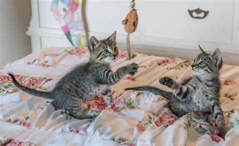 wie viel arbeit macht eine katze schlafen katzen den