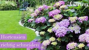 Hortensien Wann Pflanzen : hortensien pflanzen zeitpunkt hortensien pflanzen ~ Lizthompson.info Haus und Dekorationen