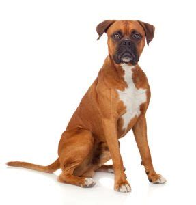 Some breeds are also associated with higher risk because of the assumptions they might be more aggressive than others. State farm homeowners insurance dog breed restrictions - insurance