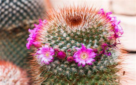 cactus, Flower, Bokeh, Desert, Plant, Nature, Landscape ...