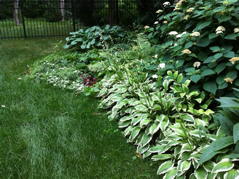 large hostas shade teresa s garden song urban vegetable gardening grow your own