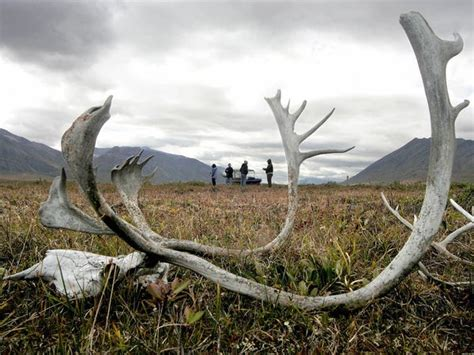 How global warming has ravaged the Arctic and threatens