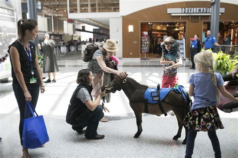 horses airport pet horse miniature mini therapy lounge into passengers calm wsj pricescope cutback economic delta turned win brought animals