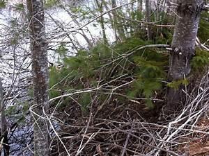 Mammals Of Nova Scotia With Mr  Rimlinger  Day 6  March 28