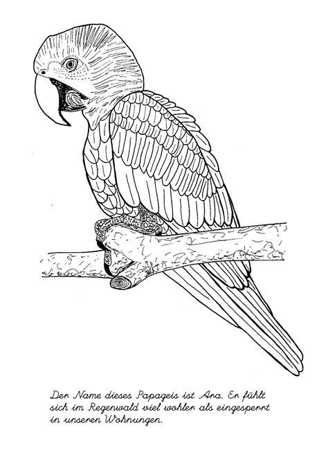vogelbilder zum ausmalen malvorlagen fuer kinder