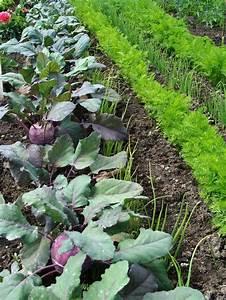 Wassermelone Anbau Balkon : die besten 25 salat anpflanzen ideen auf pinterest aus samen z chten avocadobaum kaufen und ~ Watch28wear.com Haus und Dekorationen