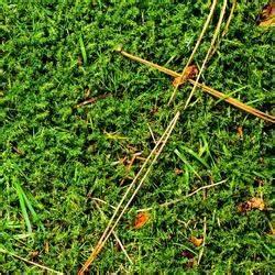 Desherbant Mauvaise Herbe : tuer les mauvaises herbes naturellement jardinage ~ Premium-room.com Idées de Décoration