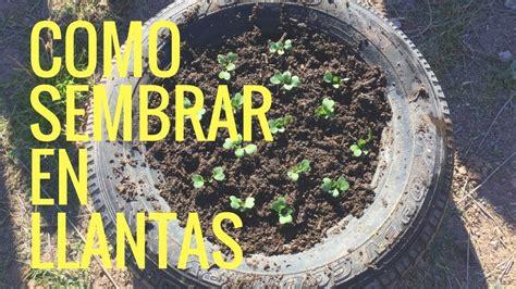 como sembrar rabano en llantas recicladas en casa manos de tierra youtube