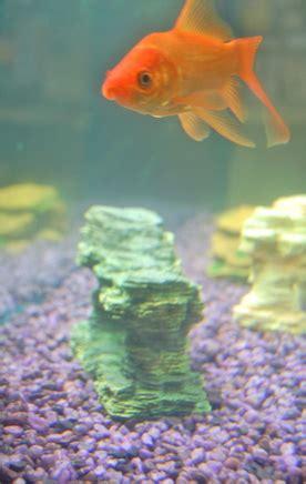 diy fish tank decorations ehow uk