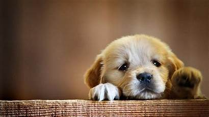 Dog 1080p Puppy Wallpapers Background Wallpapersafari Snout