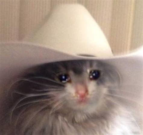 You can also upload and share your favorite cat meme wallpapers. Cat With Cowboy Hat Crying - All About Cow Photos