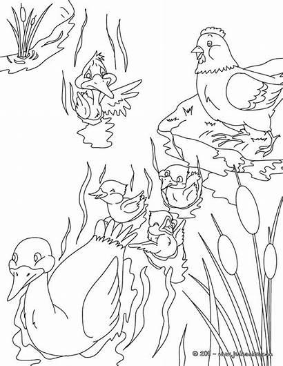 Coloring Ugly Duckling Colorear Canard Andersen Fairy