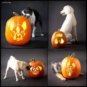 Dog Jack O Lantern Pumpkins