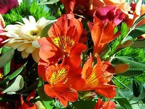Feuille De Lys : images gratuites fleur p tale couleur flore arbuste fleur coup e lis fleuriste bouquet ~ Nature-et-papiers.com Idées de Décoration