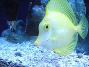 Beautiful Ocean Fish