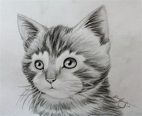 animal drawings google search drawings pinterest