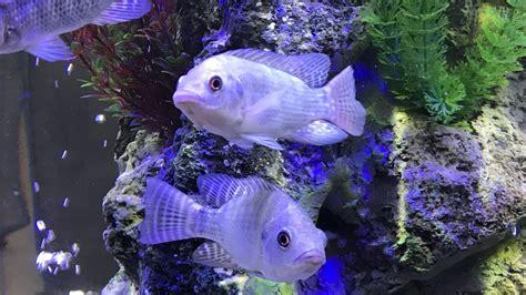 Kādas dažādu sugu zivis drīkst turēt akvārijā? — Santa