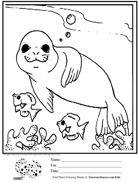 coloring page seal swimming  fish coloring pages pinterest cute coloring pages