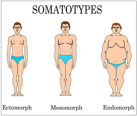 Endomorph training schema