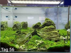 Co2 Rechner Aquarium : nano alps flowgrow aquascape aquarium database ~ A.2002-acura-tl-radio.info Haus und Dekorationen